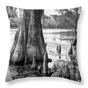 Florida Cypress, Hillsborough River, Fl In Black And White Throw Pillow