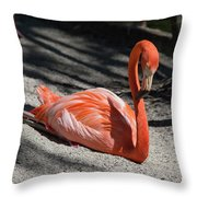 Florida Flamingo Throw Pillow