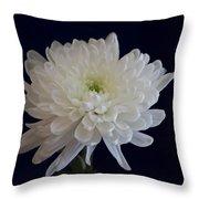 Florida Flowers - White Gerbera Ready For Full Bloom Throw Pillow