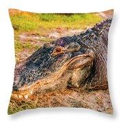 Florida Gator 1 Throw Pillow