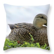 Florida Mallard Throw Pillow