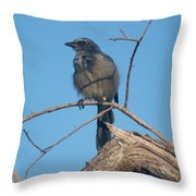 Florida Scrub Jay Watching The Lay Of The Scrub Throw Pillow