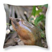 Florida Soft Shelled Turtle Throw Pillow