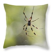 Florida Spider Throw Pillow