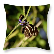 Florida State Butterfly Throw Pillow
