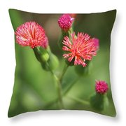 Florida Tasselflower Throw Pillow