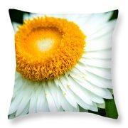 Flower Blossom 3 Throw Pillow