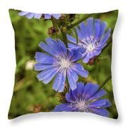 Flower Chicory Throw Pillow