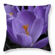 Flower Crocus Throw Pillow