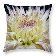 Flower Dahlia. Macro Throw Pillow