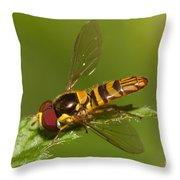 Flower Fly Allograpta Obliqua Throw Pillow
