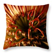 Flower Hawaiian Protea Throw Pillow
