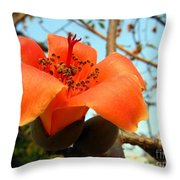 Flower Of The Red Silk Cotton Tree  Throw Pillow