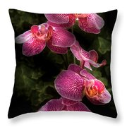 Flower - Orchid - Phalaenopsis - The Cluster Throw Pillow