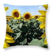 Flower Sunflower,yellow Flower, Throw Pillow