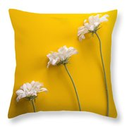 flower, white, three, online, Yellow Background, lateral, vertic Throw Pillow