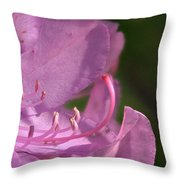 Flower With Pistil And Stamens Displayed Throw Pillow