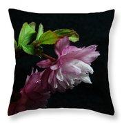 Flowering Almond 2011-15 Throw Pillow