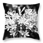 Flowering Blue African Lily Of The Nile Throw Pillow