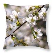 Flowering Cherry Tree Branch 4 Throw Pillow