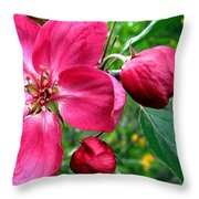 Flowering Crab Apple Throw Pillow