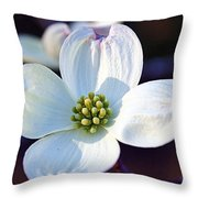 Flowering Dogwood Throw Pillow