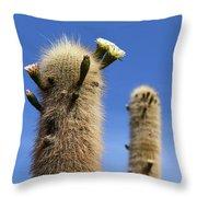 Flowering Echinopsis Atacamensis Cactus Bolivia Throw Pillow
