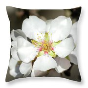 Flowering Fruit Tree Throw Pillow