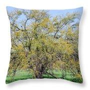 Flowering Huisache Tree  Throw Pillow