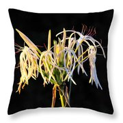 Flowering In Florida Throw Pillow