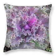 Flowering Kale Throw Pillow