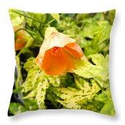 Flowering Maple Throw Pillow