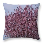 Flowering Plum In Bloom Throw Pillow