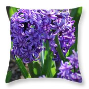 Flowering Purple Hyacinthus Flower Bulb Blooming Throw Pillow