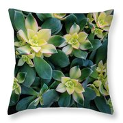 Flowering Succulent Plant Throw Pillow