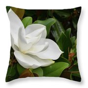 Flowering White Magnolia Blossom On A Magnolia Tree Throw Pillow