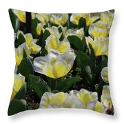 Flowering Yellow And White Tulips In A Spring Garden  Throw Pillow
