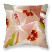 Flowers-hoya 1 Throw Pillow