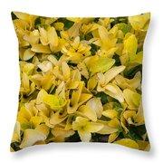 Flowers Of Domitilla Throw Pillow