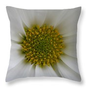 Core Of A Daisy Throw Pillow