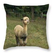 Fluffy Alpaca Throw Pillow