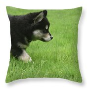 Fluffy Alusky Puppy Stalking In Green Grass Throw Pillow