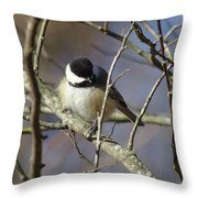 Fluffy Chickadee Throw Pillow