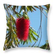 Fluffy Reds At The Library Throw Pillow