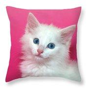 Fluffy White Kitten On Pink Throw Pillow