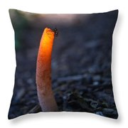Fly And Stinkhorn Throw Pillow