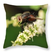 Fly Beauty Throw Pillow
