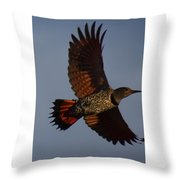 Fly Flicker Fly Throw Pillow