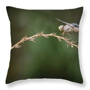 Fly Little Dragonfly Throw Pillow
