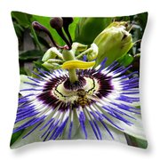 Fly On A Passion Flower Throw Pillow